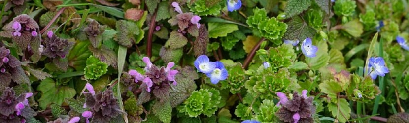 Herbs for health and wellbeing